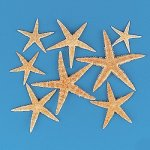 Fun Express Real Starfish Decoration (30 Piece)